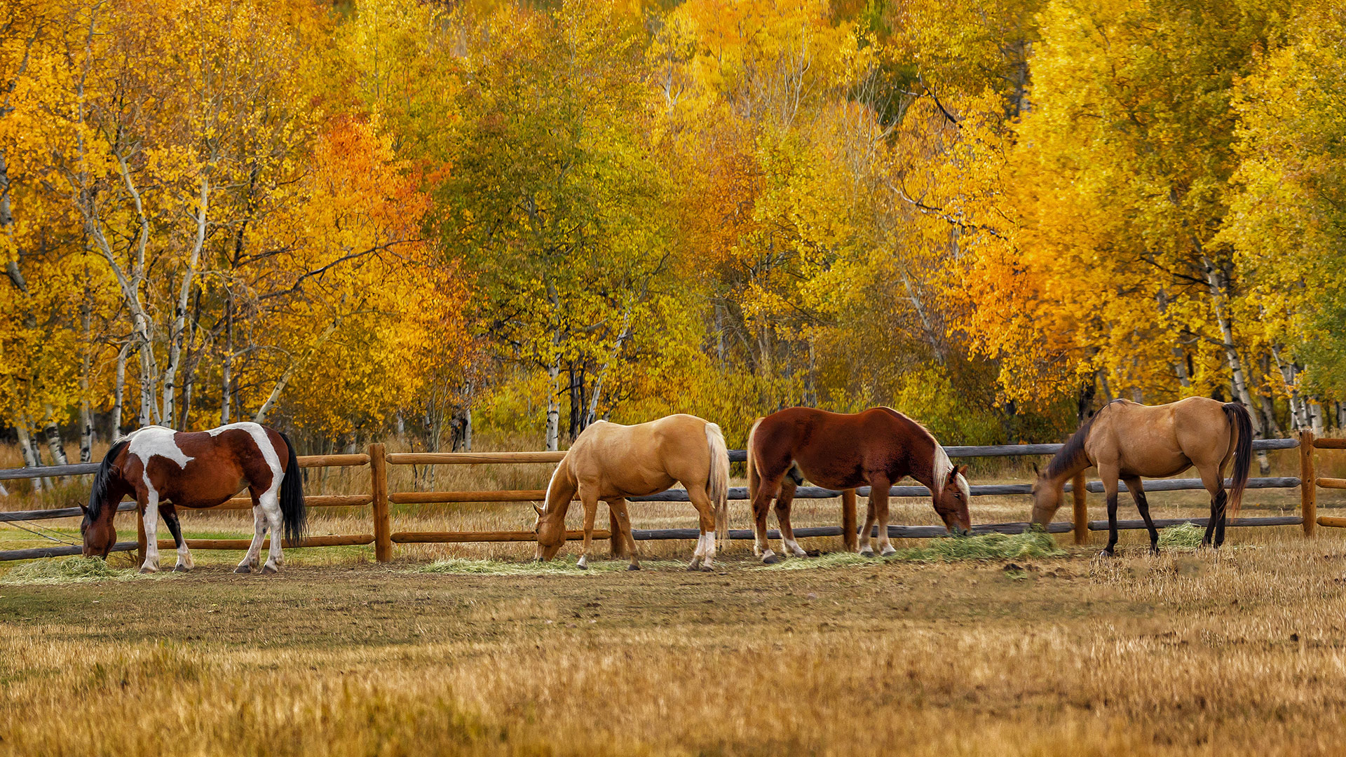 horses-homepage-banner-02